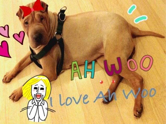Awoo. by JIW Tweeter 12 11 8