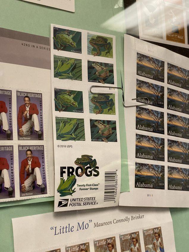 2019 11 12 JIW's Fan 13 Frog Encounter