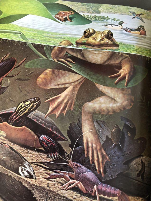 2019 9 13 JIW's Fan 13 Frog Encounter.JPG