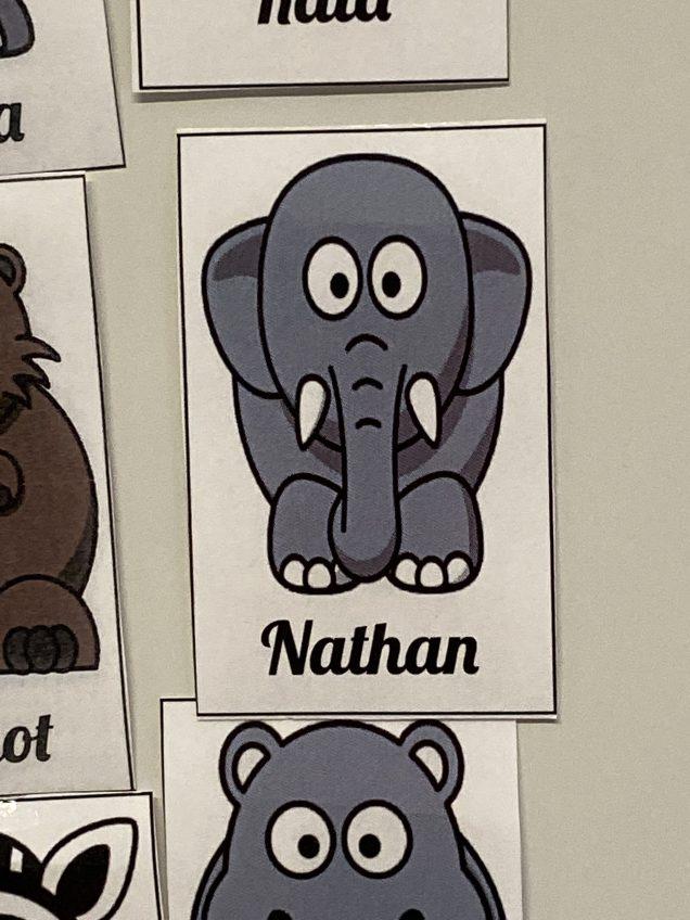 2019 Elephant Encounters by Fan 13 in 2019 6