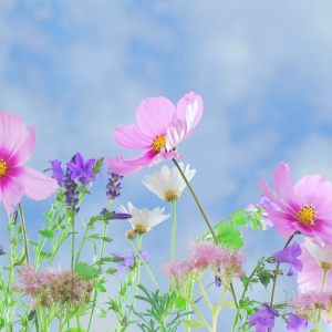 Mental health benefits of being in Nature: Pink and purple flowers up close against a blue sky background