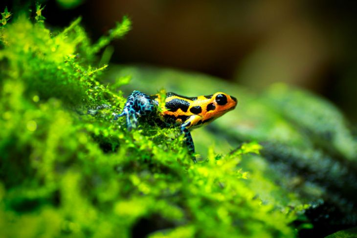 Update Regarding the Dart Frog Ban in Alberta