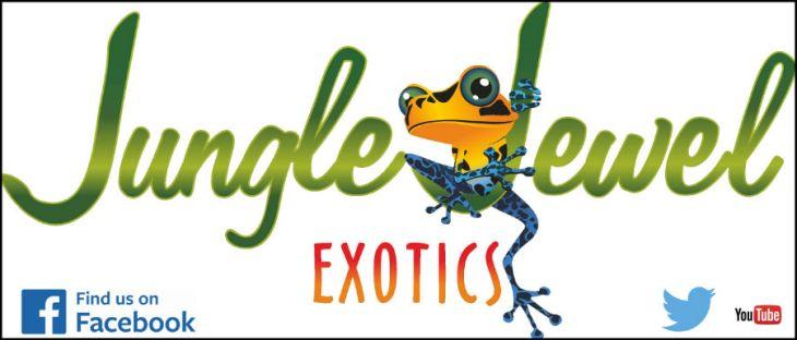 Jungle Jewel Exotics Frog List