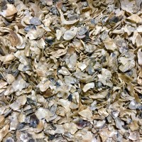 Crushed Oyster Shells