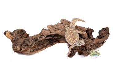 mopani wood medium