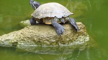 đọc với rùa