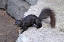 Ein freches Grauhörnchen