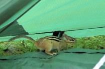 Ich glaube, wir haben einen neuen Zeltmitbewohner :D