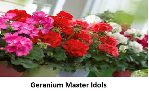 Geranium Master Idols Image