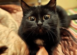 animals-who-are-terrible-at-judging-distances-4