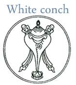 white conch