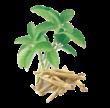 ashwagandha_herbs