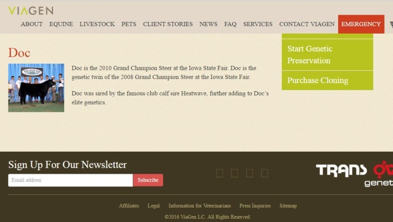 Pet Cloning prized Steer wins award