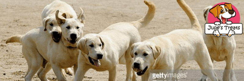Pet Cloning