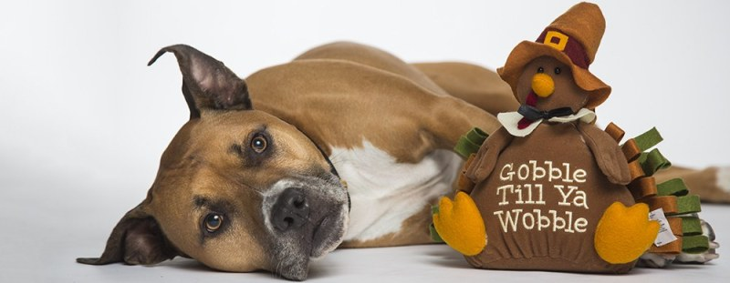 Thanksgiving treats to avoid giving your pet
