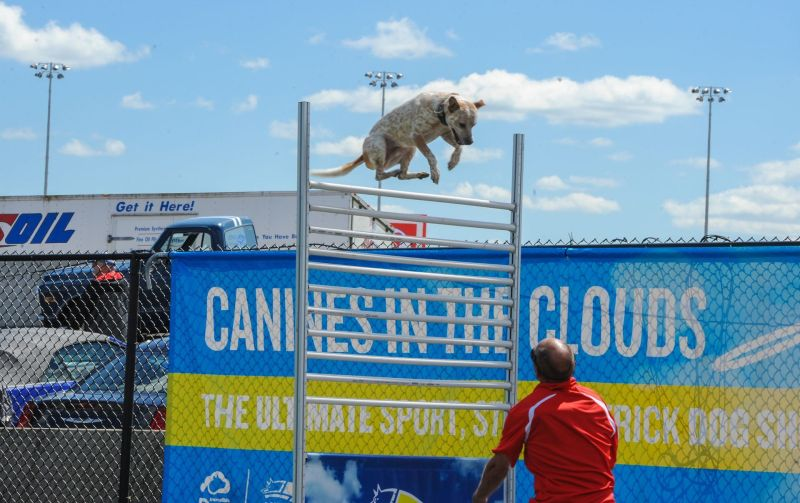 The high-flying All-Star Stunt Dogs wowed the crowds during Friday's action at the Pennzoil AutoFair at Charlotte Motor Speedway.