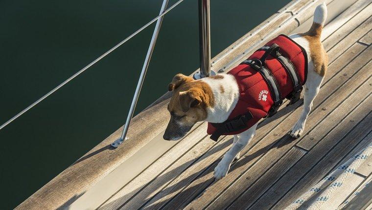 Dog on a sail boat