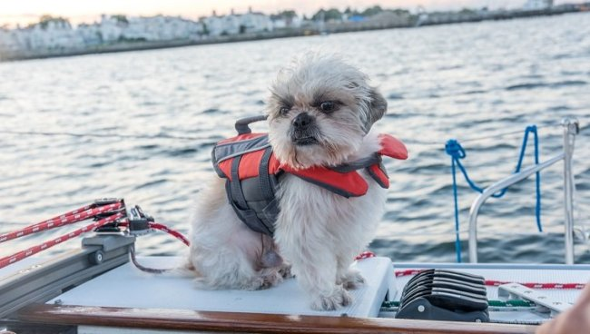 Dog in a boat on the water