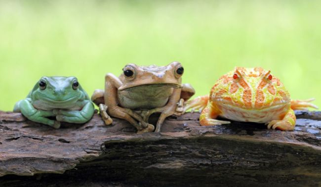 Reptiles & Amphibians: About 90% of amphibians are frogs.