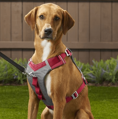 front-clip-harness-for-dogs