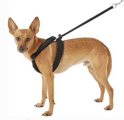 no-pull-harness on a brown-dog