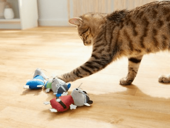 Swashbuckling Pirate Cat Toy