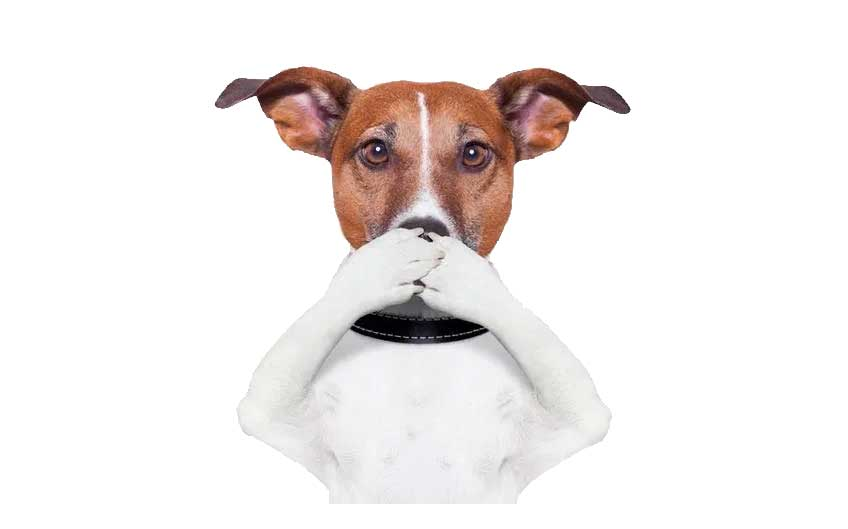 Whimzees help fight bad breath in dogs