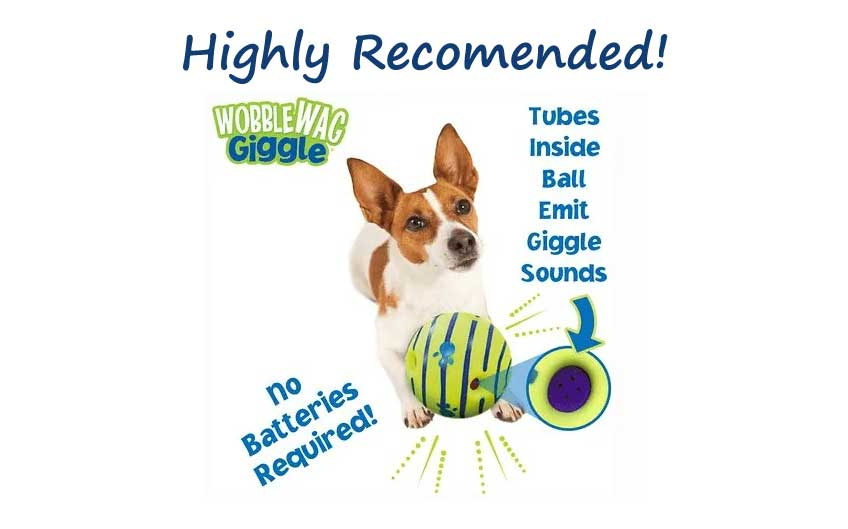 Giggle ball dog toy.