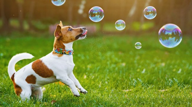 bubbles are a great summer activity