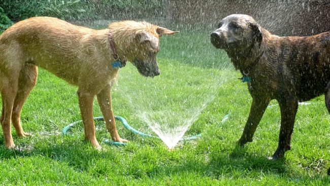 Summer activity for dogs