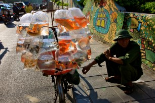 Selling goldfish on the streets of Hanoi