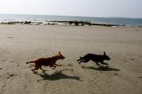 Tala chasing