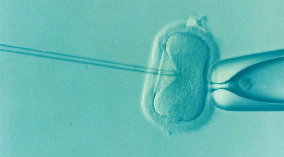 procreazione assistita