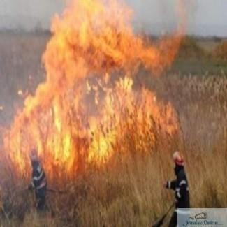 Incendiu in Delta Dunarii 1