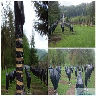 Crucile eroilor romani dintr-un cimitir al eroilor din Harghita, acoperite cu pungi de gunoi 1