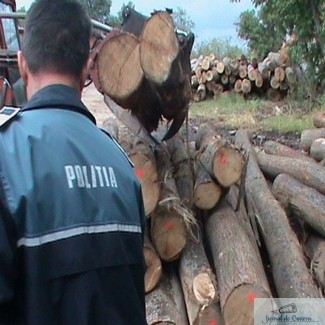 Au fost retinuti doi barbati din Arges care incercau sa comercializeze material lemnos din doua autoutilitare, pe raza satului Secui
