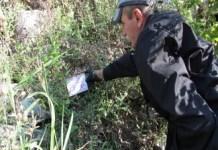 Salubritate Craiova : A doua etapă de deratizare pe domeniul public, în perioada 8-18 iulie