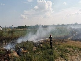 Incendiu de vegetatie pe raza localității Cotofenii din Fata