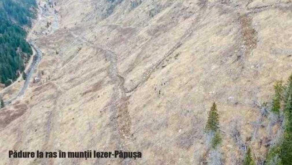Pădure refăcută în Iezer-Păpuşa 1