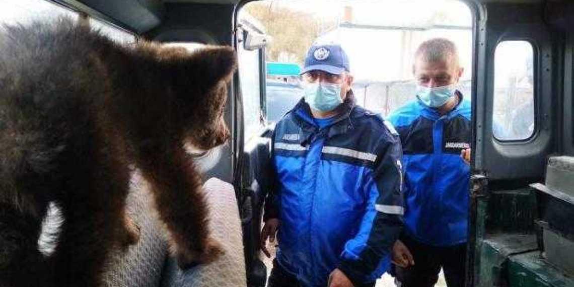 Jandarmii argeșeni fac din nou fapte bune! Au ajutat la salvarea a doi pui de urs 1