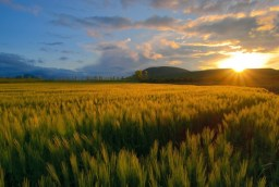 Soarele da viata Naturii