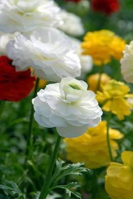 flori poza mare