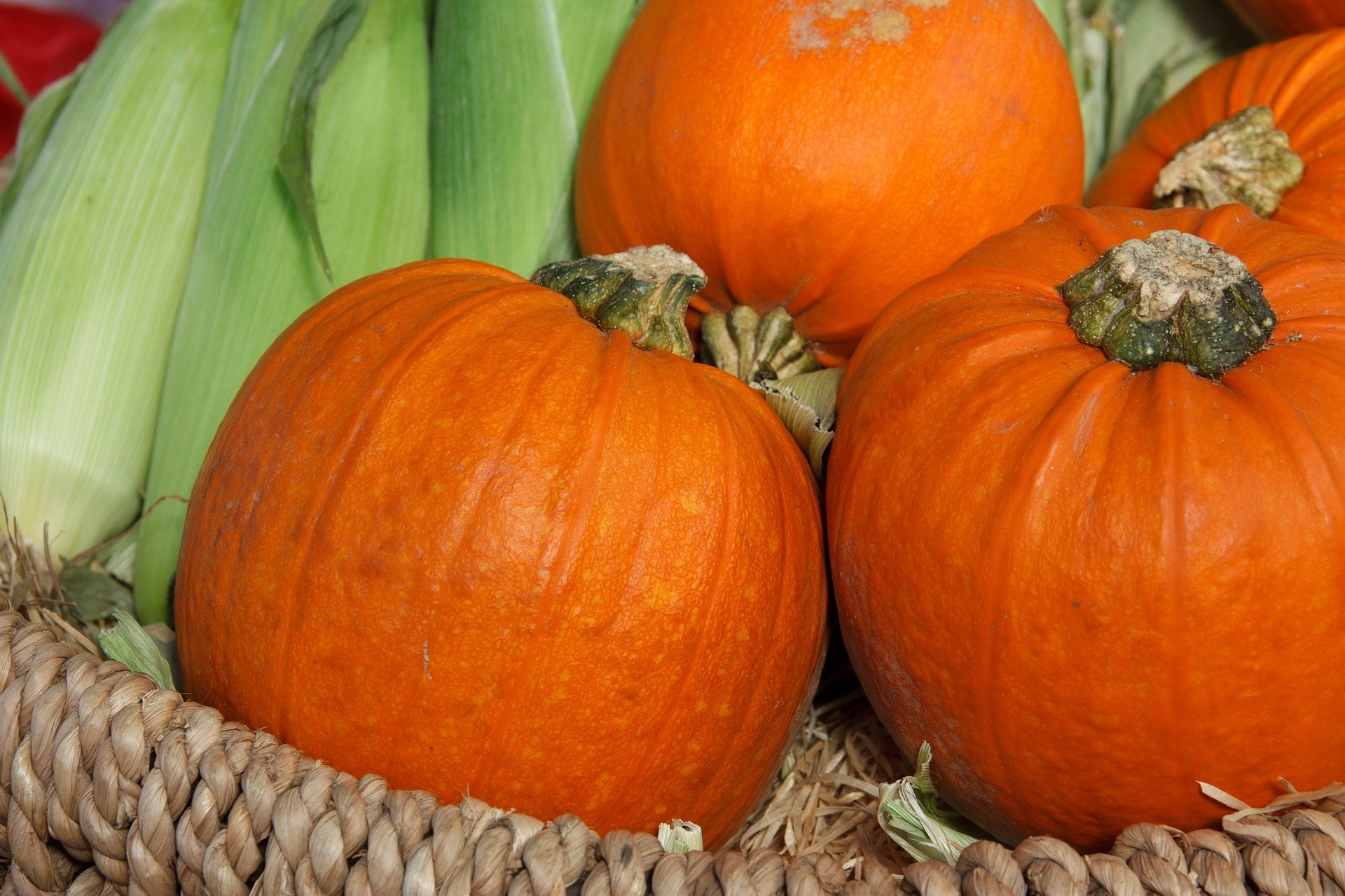 Image of pumpkins for the pumpkin patch parable