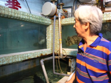 Big fish waiting for the boss to toss another shrimp into its tank; Lei Yue Mun