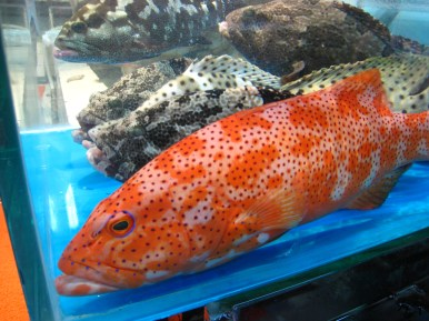 Groupers; Lei Yue Mun