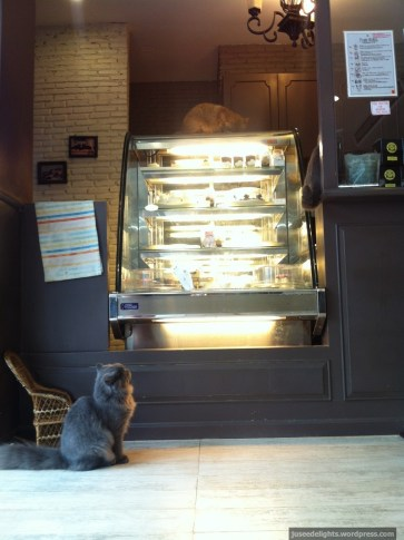 Cake counter; Purr Cat Café Club, Bangkok