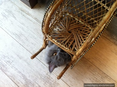Cat having fun; Purr Cat Café Club, Bangkok