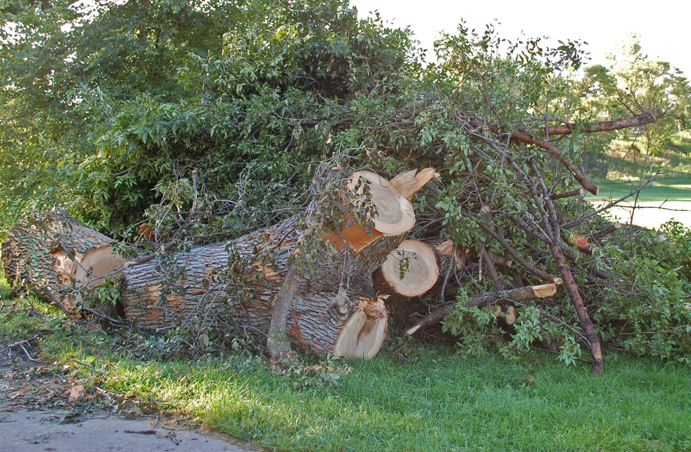 Cut Tree Just Think Of It