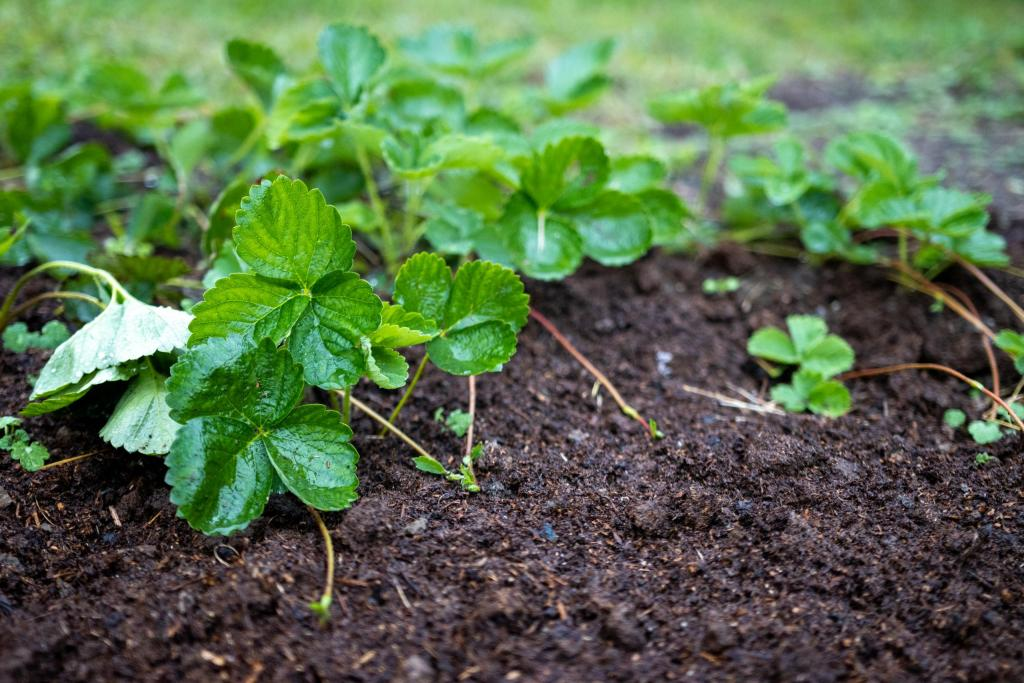 A young organic plant growing directly in organic natural fertilizer.