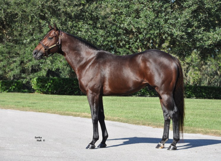 Racehorse breeding partners will have a foal sired by Poseidon's Warrior.